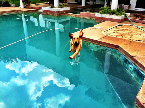 Perfectly Timed Photos Youd Struggle To Believe Are Real Page - Photographer proves dogs can fly with funny perfectly timed photos