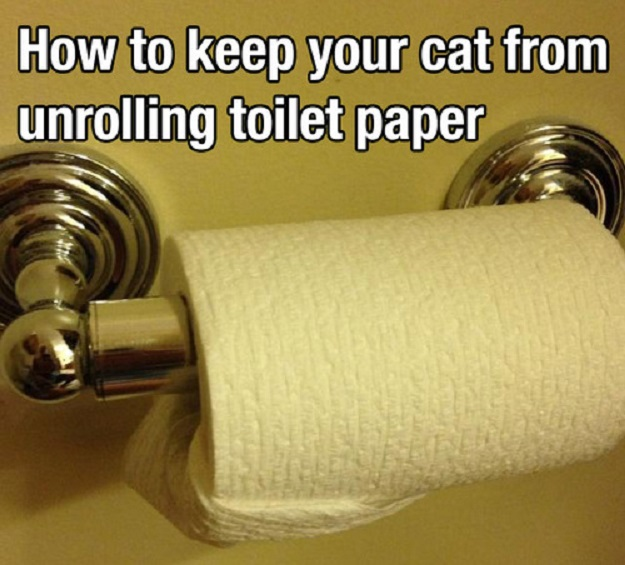 How to keep your cat from unrolling toilet paper.