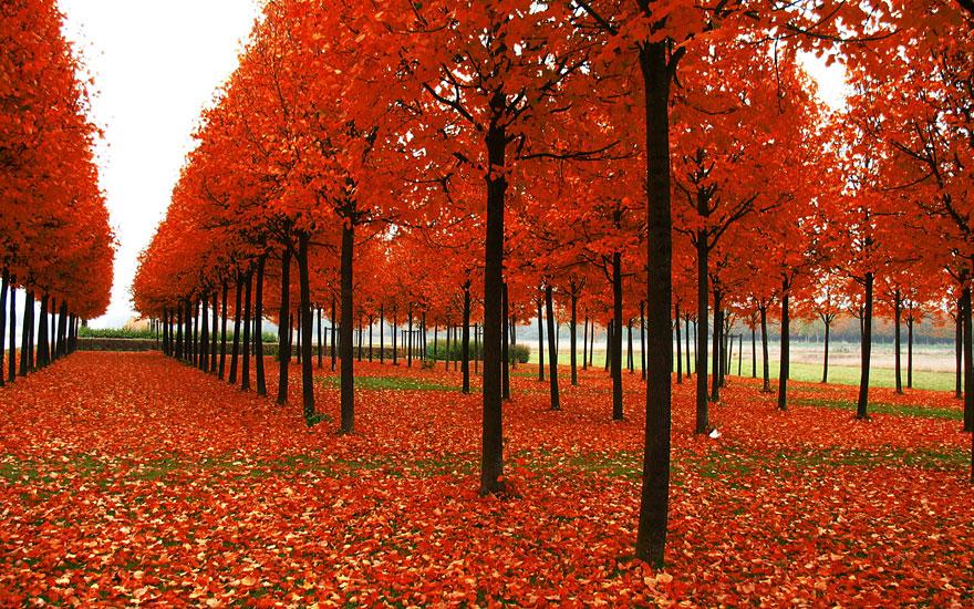 Red-Gold-Orange Splendour
