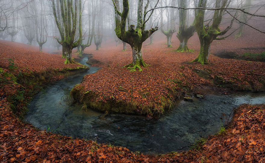 Medieval-Looking Forest