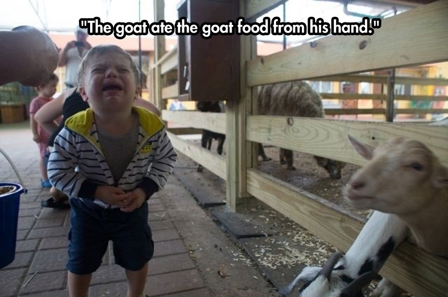 The goat ate the goat food from his hand.