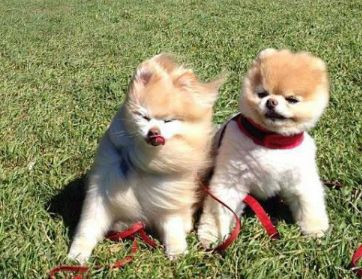 windy dog adv