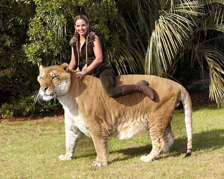 Largest Cat
