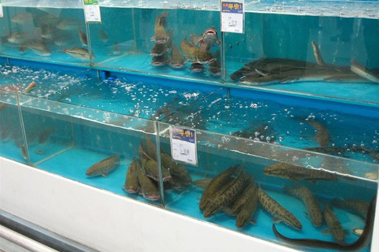 11. Live Sea Creatures
