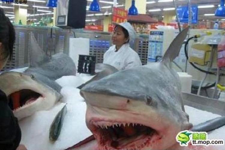 17. Shark Heads