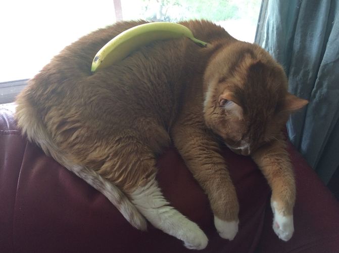 8. Is That A Tiny Banana