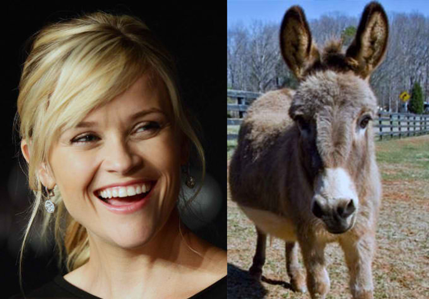 007-6-reese-witherspoon-her-pet-donkeys-506887