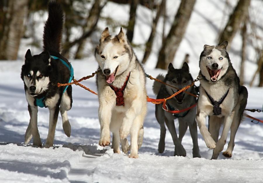 009--10-domestic-dogs-c7125ad38b5aa1c98bef3e55f8d4e02e