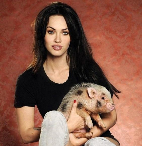 011-2-megan-fox-the-vietnamese-pot-bellied-p-507188