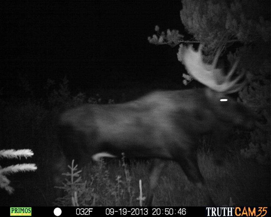 011--8-scary-moose-2802395d112b7d048281a0962c059b34