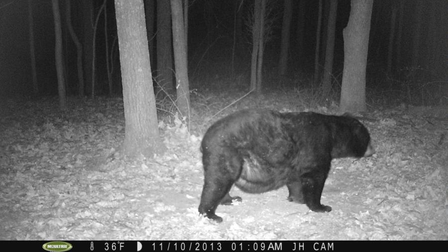 012--7-what-is-this-bear-staring-at--227081