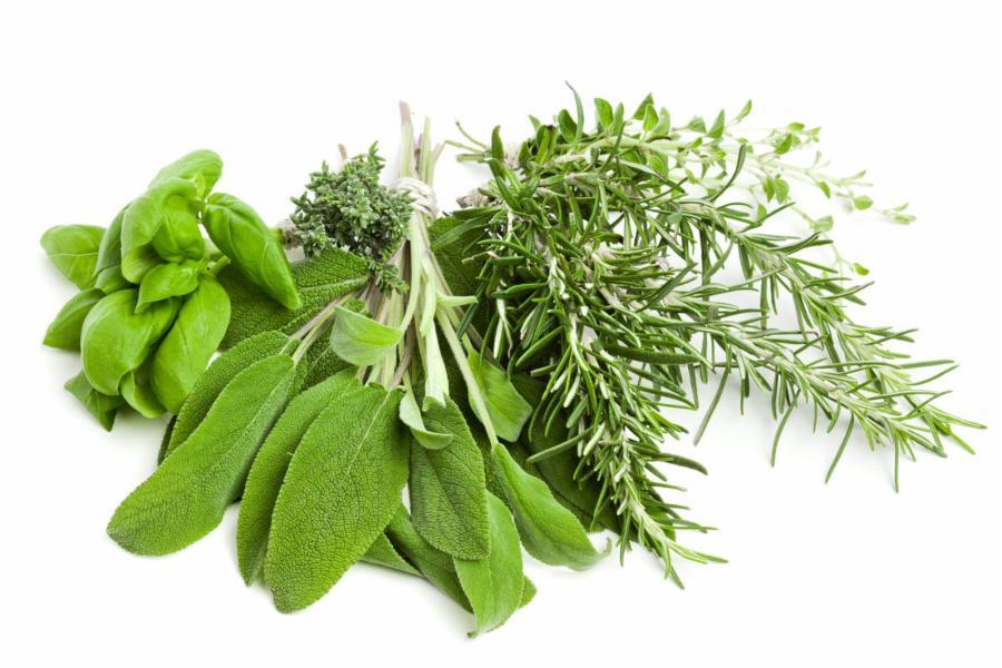 015--1-fresh-herbs-374382c990a9fe61eebcc169bff275d8