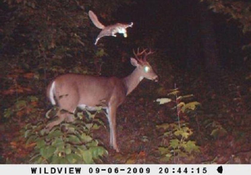 015--4-this-deer-has-no-idea-227089