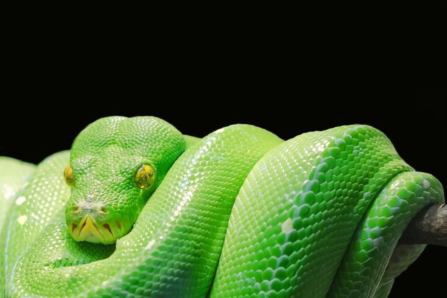 016--3-snakes-48e46136d8cf319cab10e52aa1985fbc