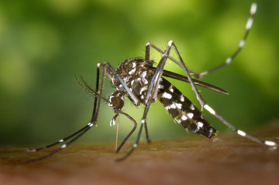 018--1-mosquito-b15a5b0d3ffc162cdea98f08dae97795