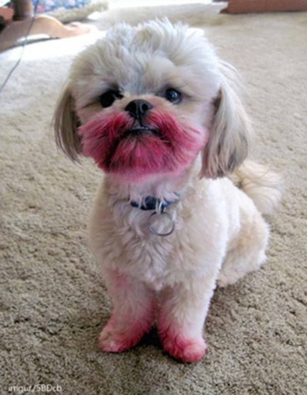 001-12-lipstick-pup-583747