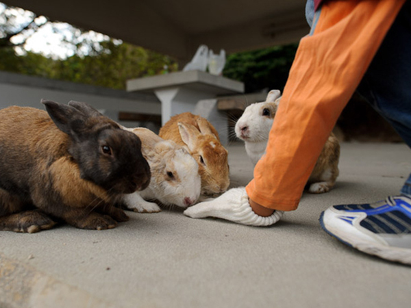 002--11-the-bunnies-were-put-there-for-a-sho-591201