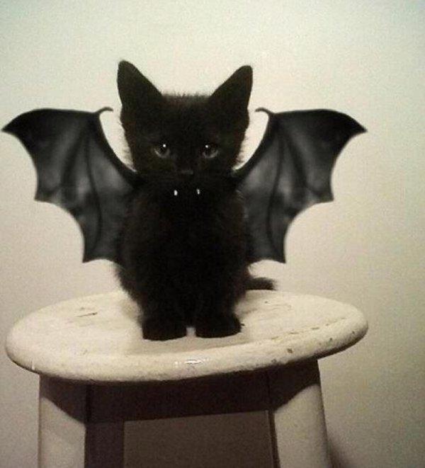 002--11-vampire-cat-567092