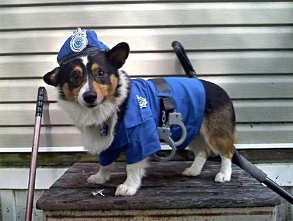 003--10-officer-bark-567082