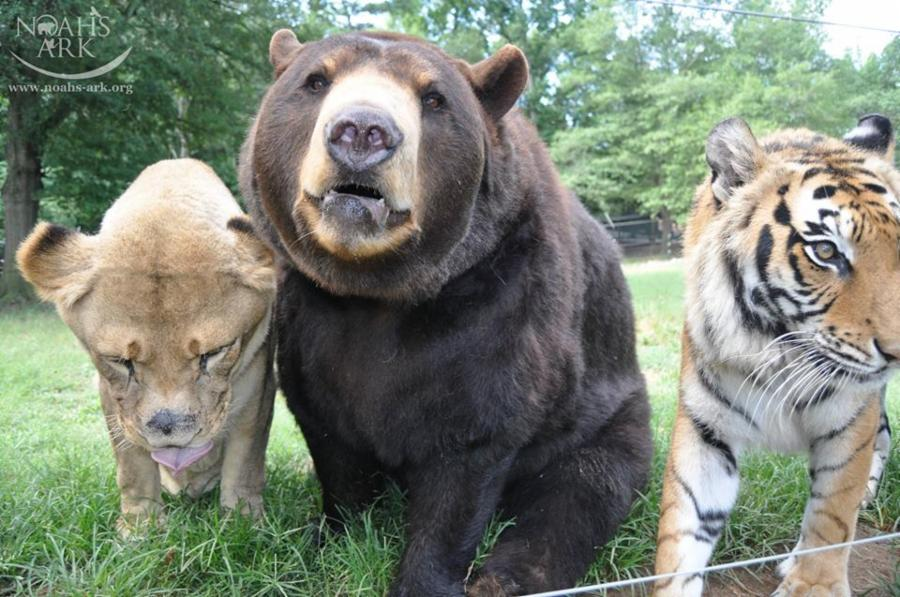 animals friends blt three unlikely years were until these tragic happened something