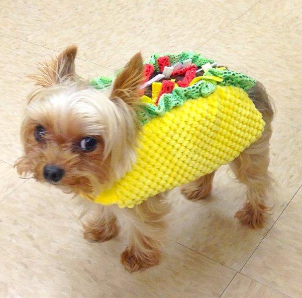 006--7-taco-dog-566994
