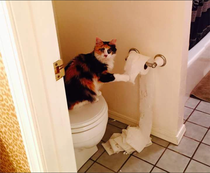 008-5-cat-caught-with-the-toilet-paper-583902