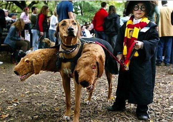 008--5-harry-potter-dog-566933
