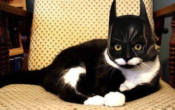 009--4-bat-cat-566923