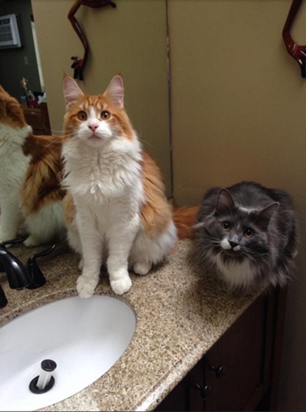 010-3-cat-burglar-583950