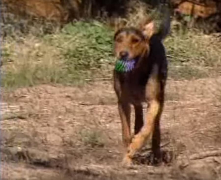 011-2-saki-the-rescue-dog-bea274a8c2021586be08a82a01c7f2ff