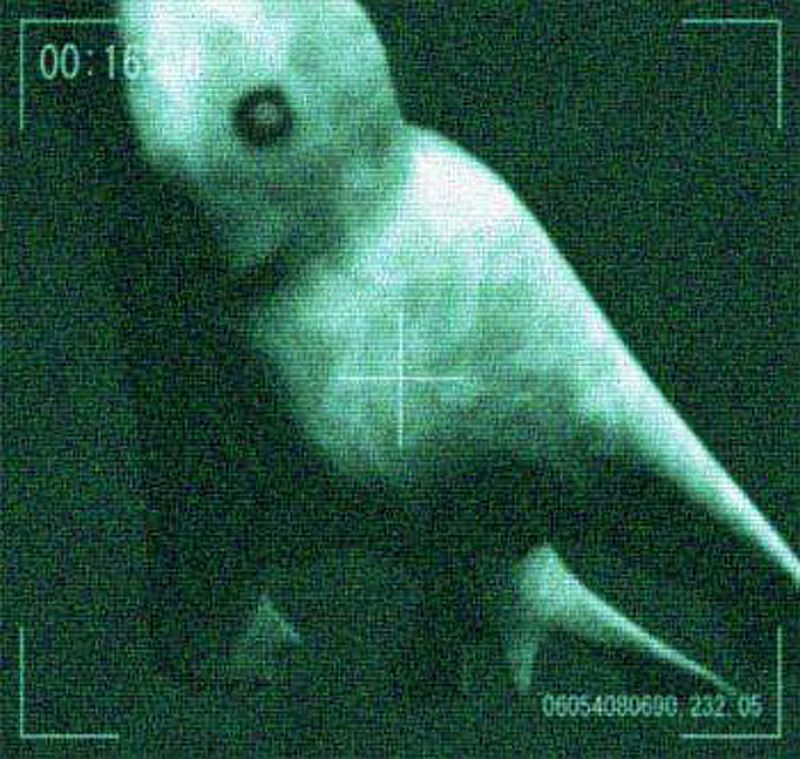 underwater-humanoid-creature