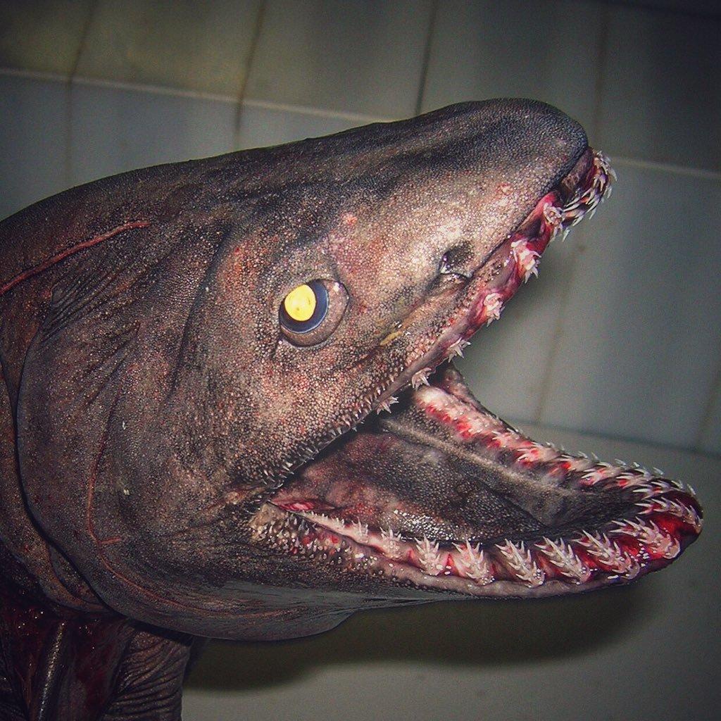 weird-shark