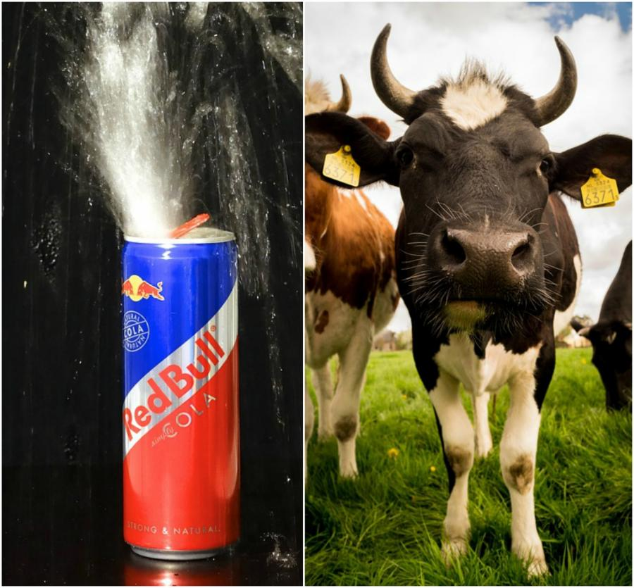 004-12-red-bull-and-milk-c4333efe7798cda01d56e84774f07dd5