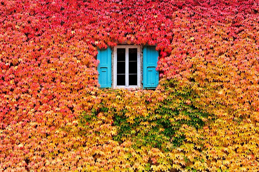Window Autumn Fall Landscapes