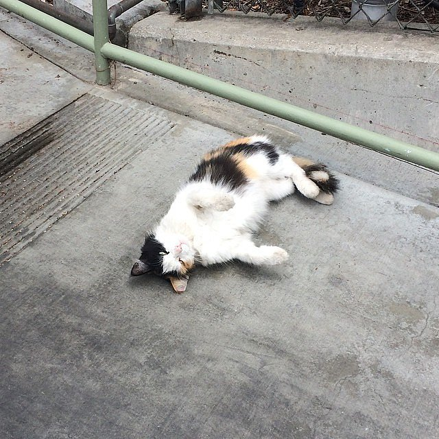 About 200 feral cats live in Disneyland to keep rodents away.