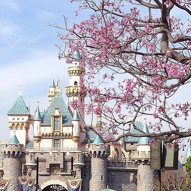 In 1995, there was a time capsule buried in Sleeping Beauty's Castle.