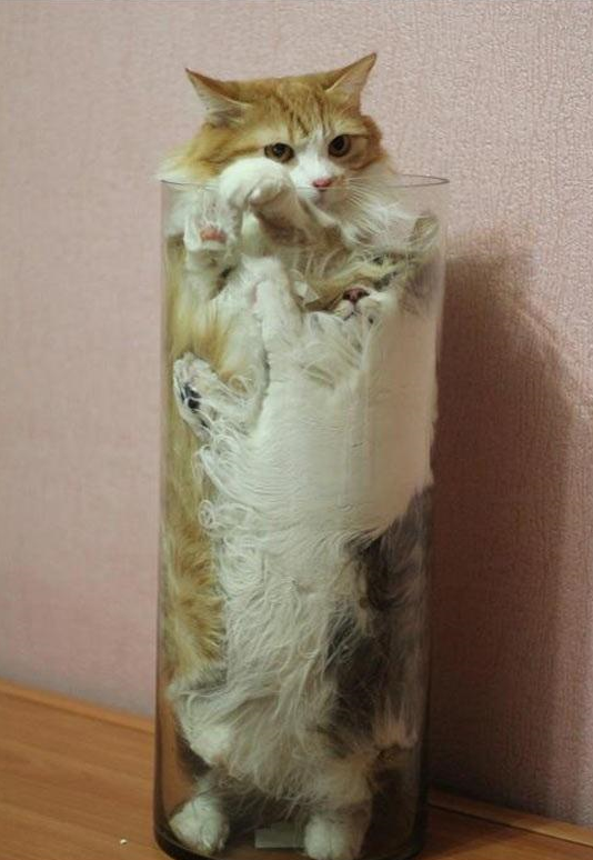 Proof That Cats Are Liquid