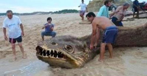 Unknown Sea Monster with Sharp Teeth