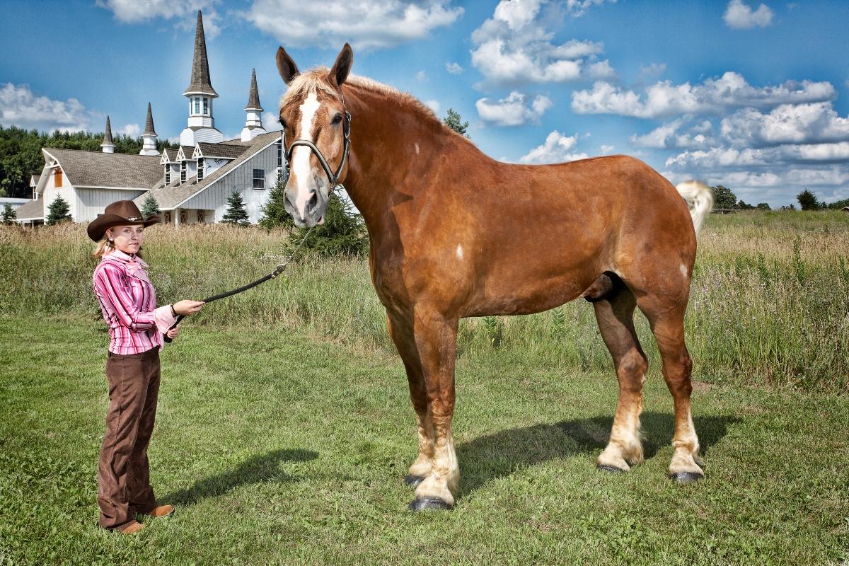 big jake the horse