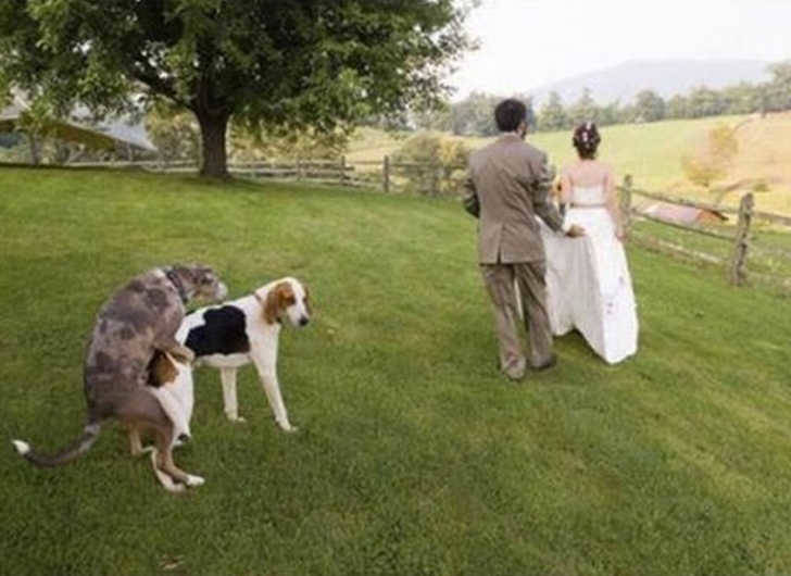 Dogs showing them how to do it on wedding night