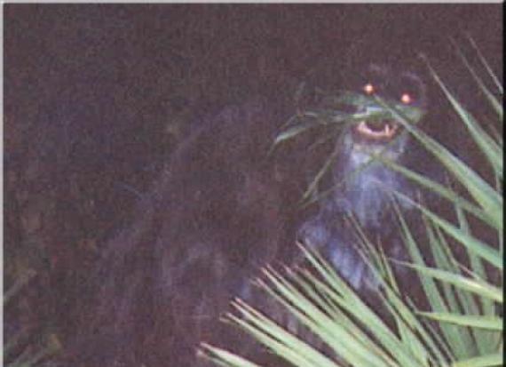 The Skunk Ape