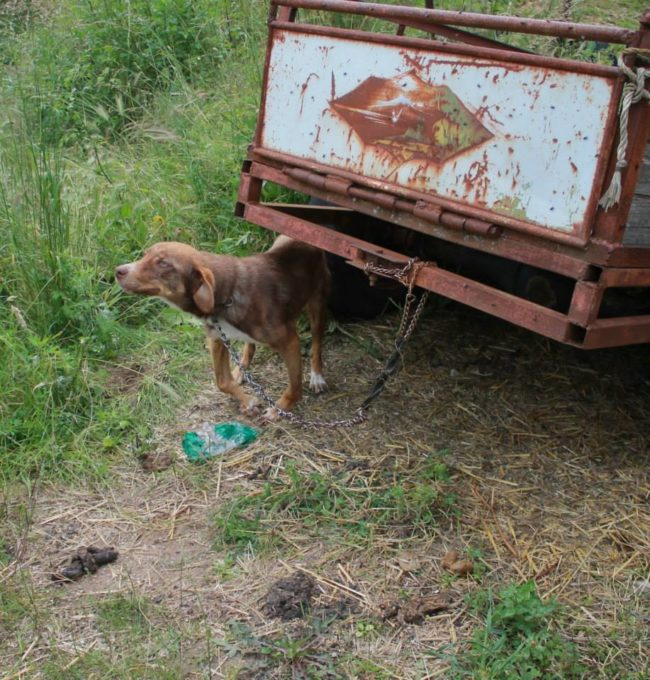 001--18-the-dog-was-barely-surviving-314427