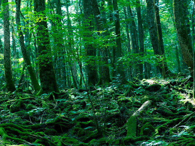 005--14-the-forest-of-suicides-japan-413374