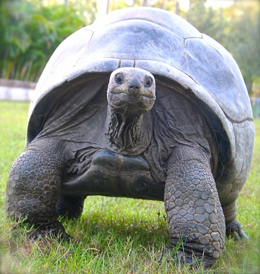 001-12-giant-tortoise-255-years-3c2d72aa8a65d09409df959eb223af4b