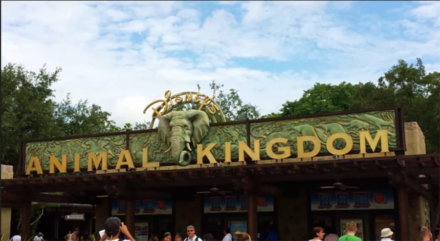 003-10-animal-kingdom-4365ae9c5483698524fbd41769a78194