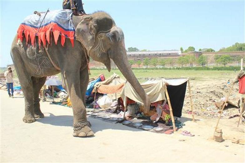 001-12-raju-was-an-elephant-suffering-immen-851897