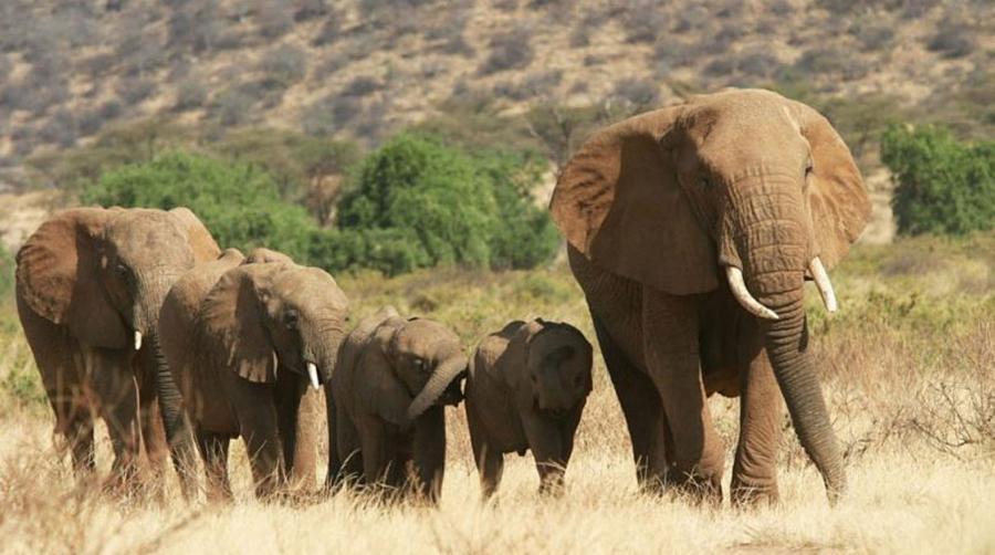 005-8-about-elephants-7a135a494cc46585636c4823a0319580