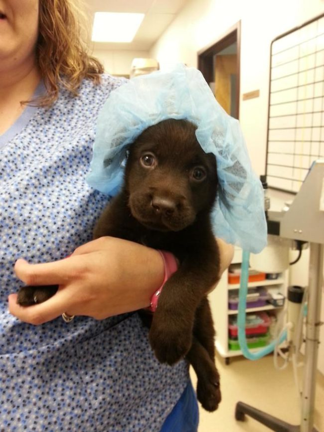 006-7-a-name-for-the-puppy-872783