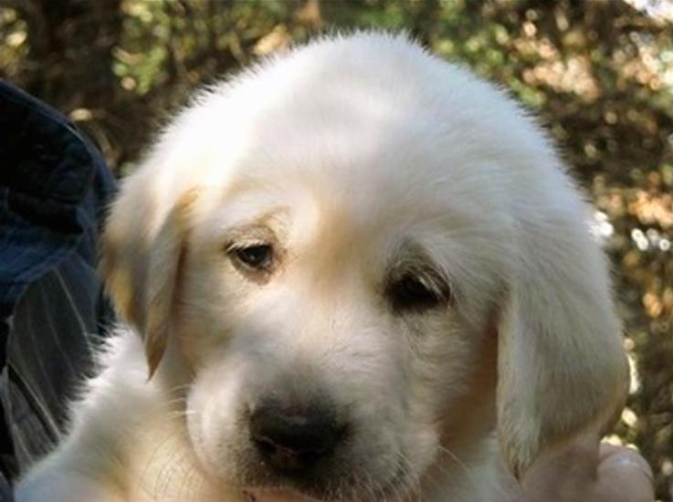 010-3-a-puppy-798636